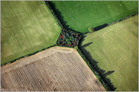 field boundaries 274px