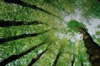 Arboriculture 274px